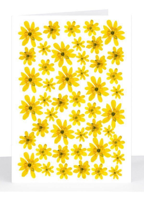 vet sympathy cards blank floral greeting card